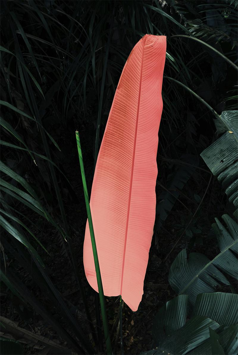 © Elsa Leydier. From the series Braços verdes e olhos cheios de asas