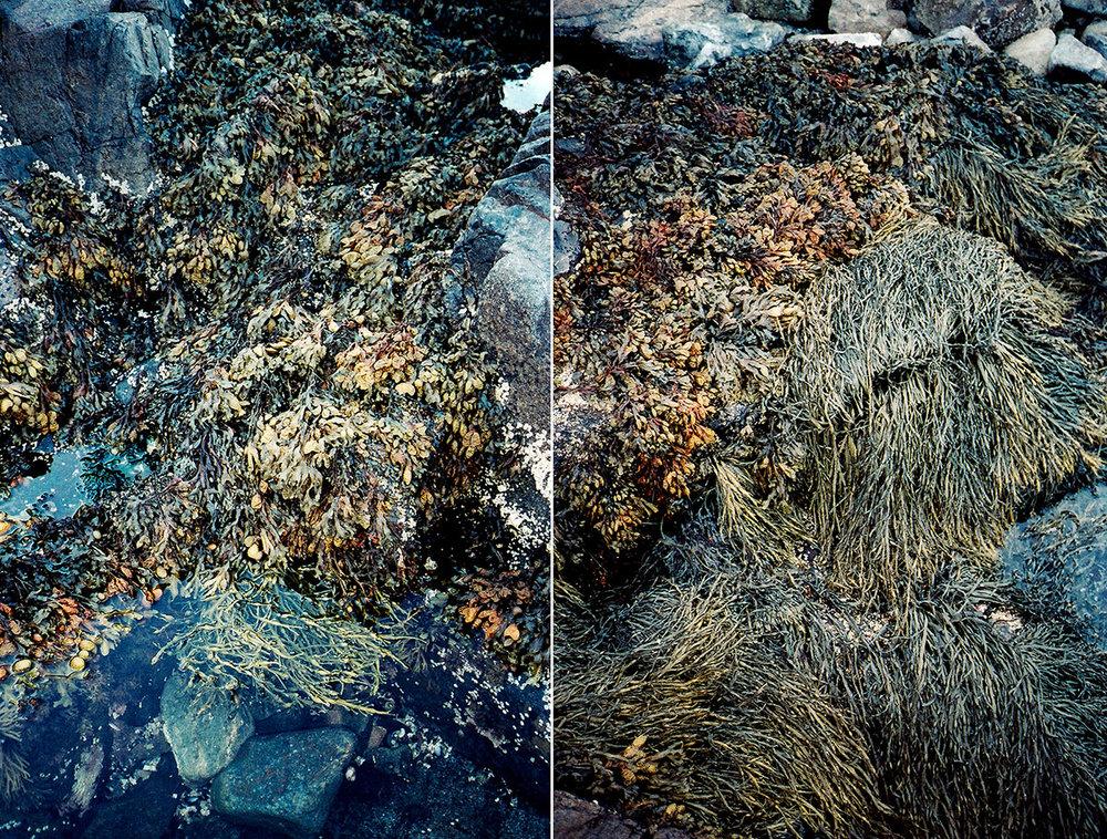 """Seaweed"" © Michael O' Shea"