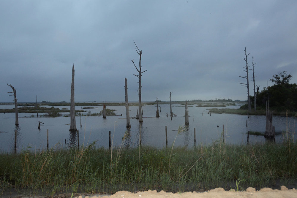Saltwater Intrusion. June 2016. Chauvin, Louisiana. © Zoe Strauss
