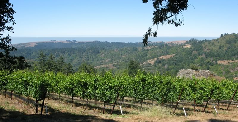 Cobb's Coastlands Vineyard