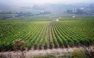 Wines from Chablis' Les Clos are stunning in 2012