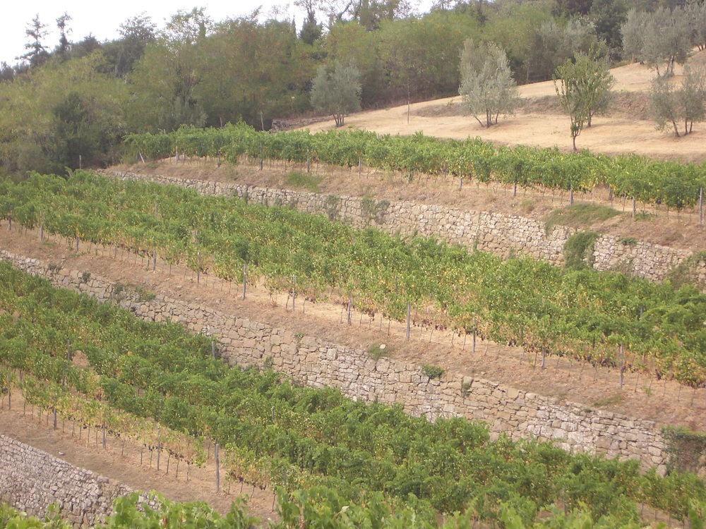 terraced vineyards on the drive up to lamole
