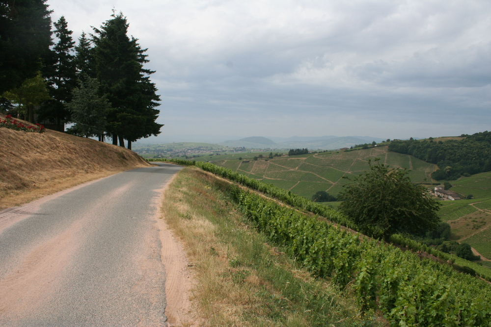 The beautiful view and steep vineyards Approaching Domaine de la Madrière in Fleurie