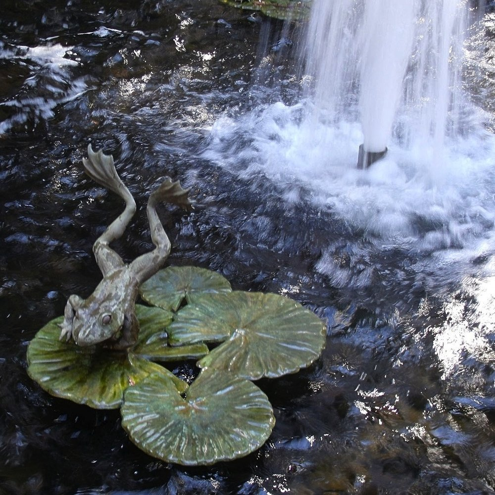 Frog_Pond_Redwood_Park_SF_Photo_by_Joanne_Olivieri_2012_detail.jpg