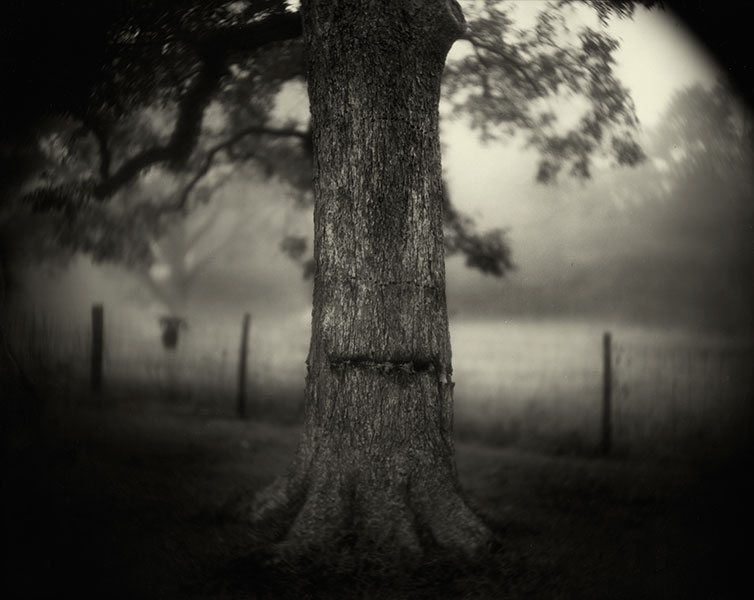 """Deep South"" Tea Toned Silver Gelatin Print © Sally Mann"
