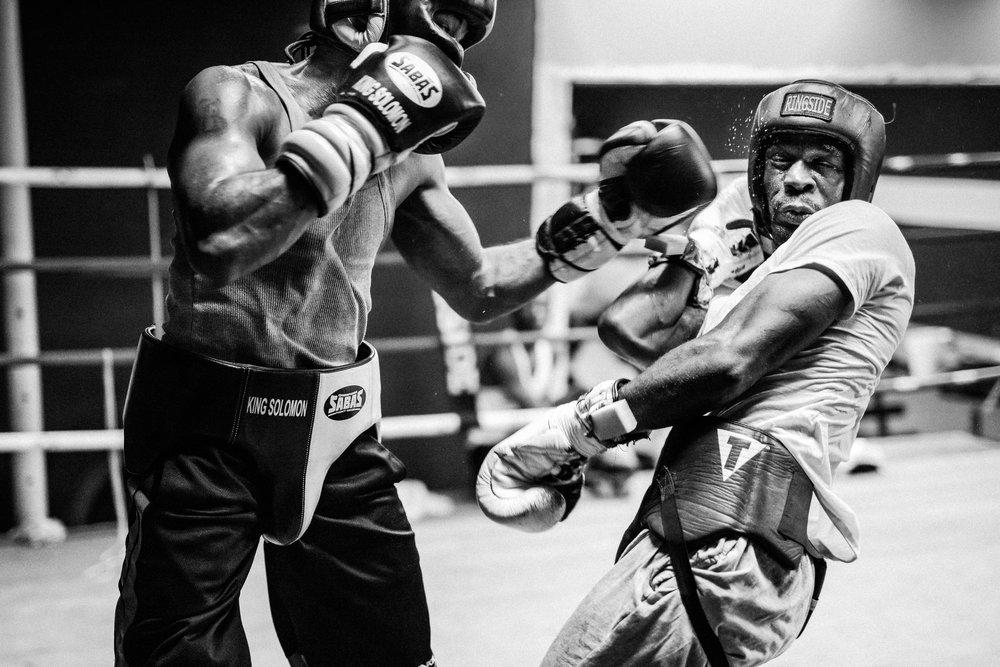 boxer cr-3.jpg