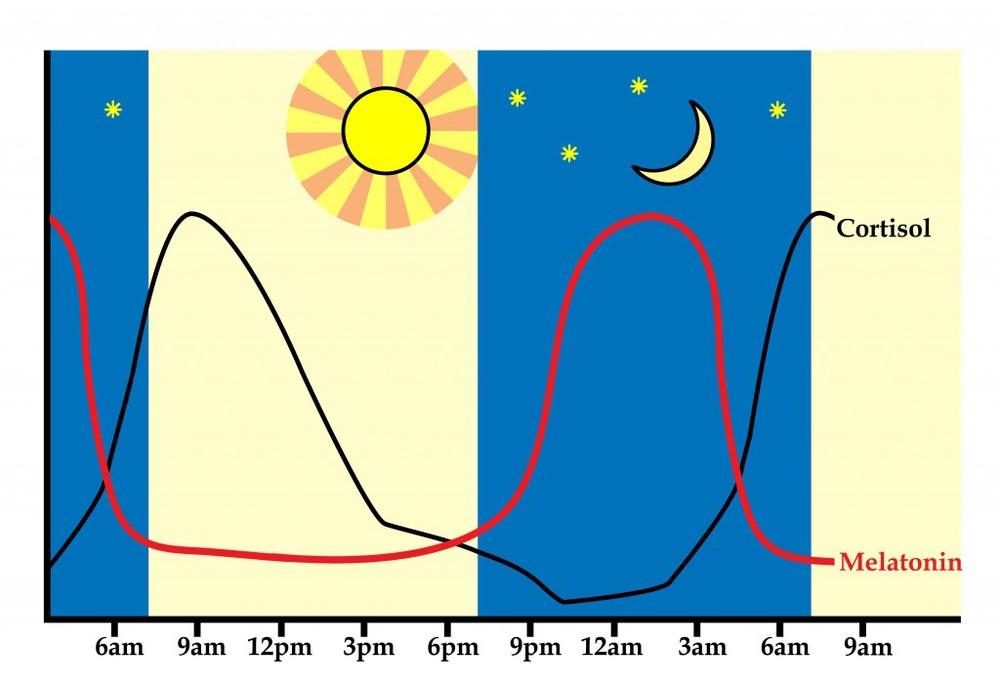 Dag- en nachtritme melatonine cortisol