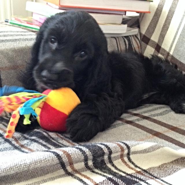 Abbey con el juguete que le regalaron sus tíos Alain e Isabelle, Junio 2015