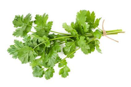 Foto: http://www.vulgaris-medical.com/phytotherapie/coriandre