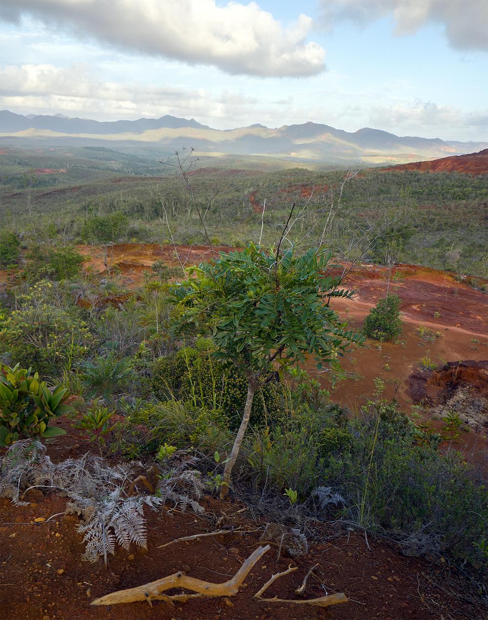 Mt Dore.jpg