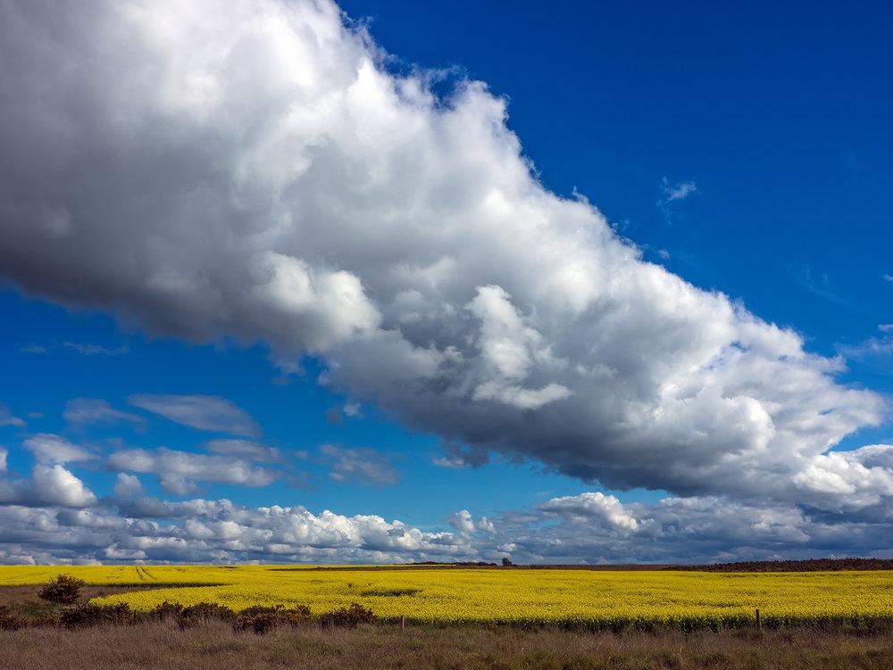 Cloud over Canola.jpg