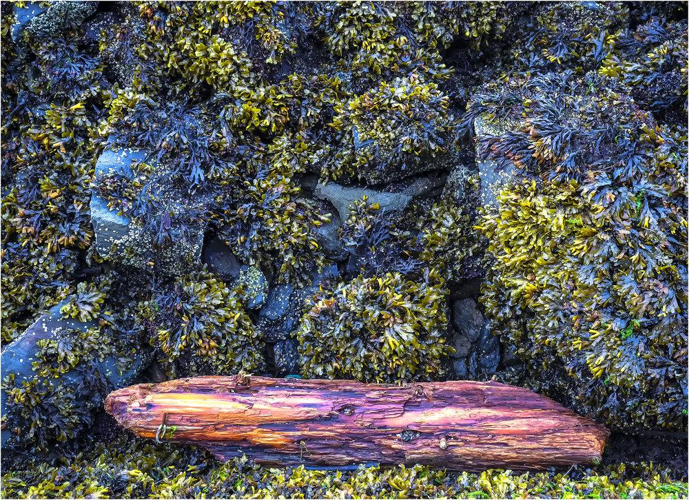 _Rocks-wood from still-life-2 copy.jpg