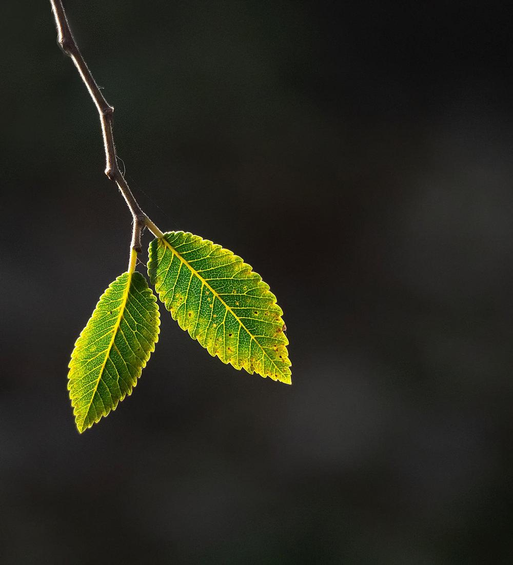 __Leaves-1J.jpg