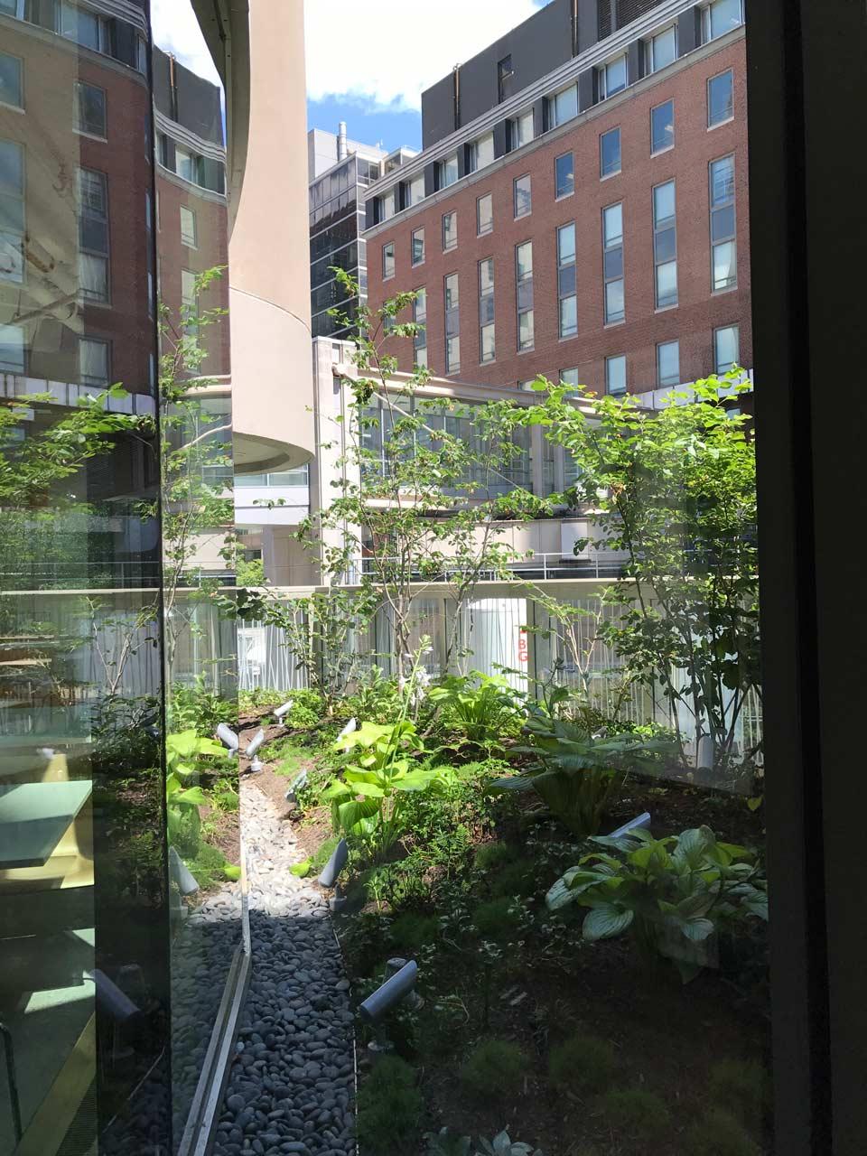 Brigham-and-Women's-Exterior-Planting3-KMDG.jpg