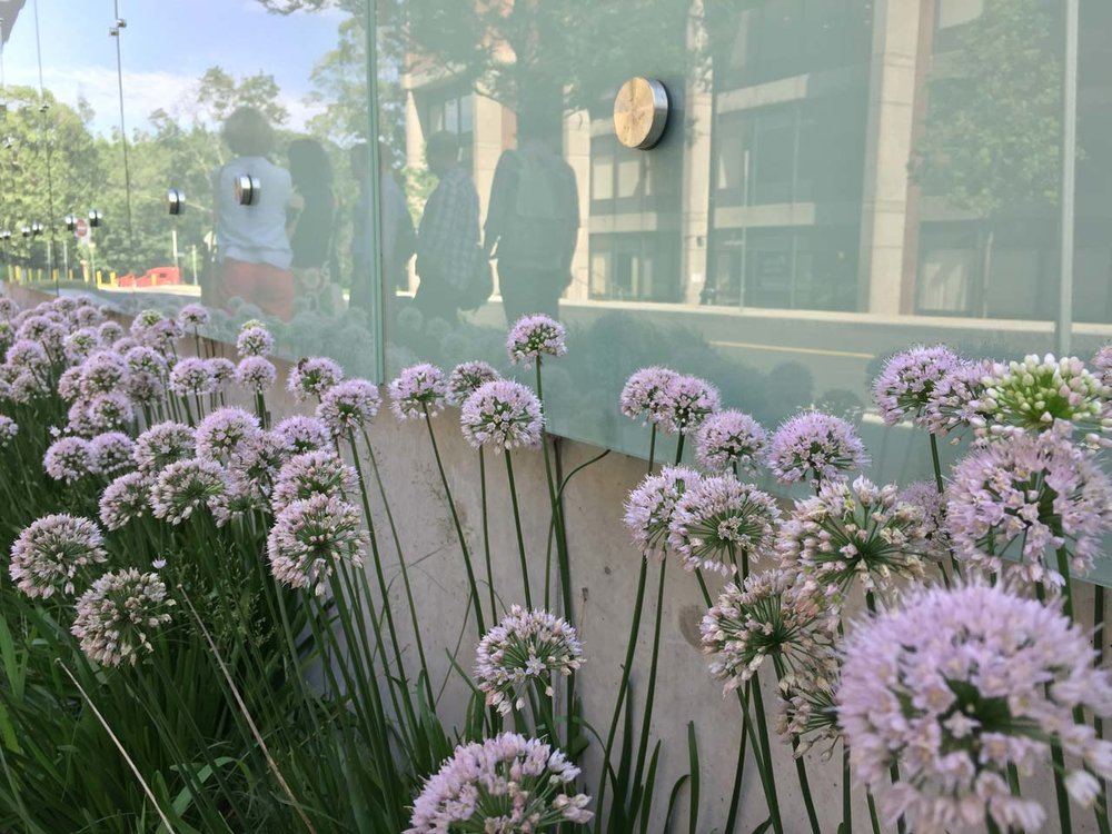 Brigham-and-Women's-Exterior-Planting2-KMDG.jpg