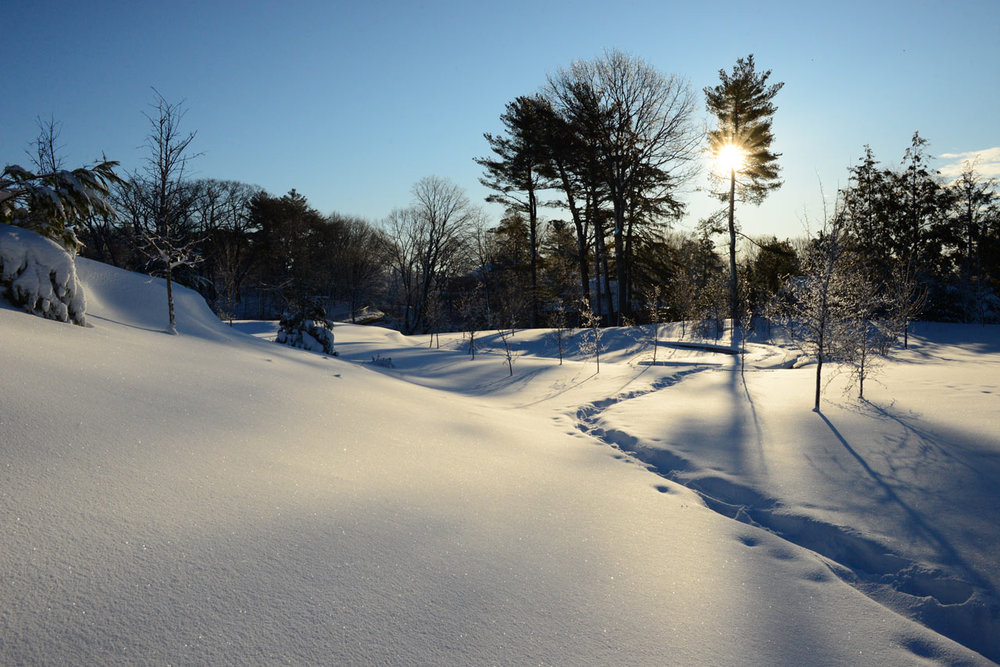 Fisher_Hill_Reservoir_Park_Snow_Woodland_Path_KMDG.jpg