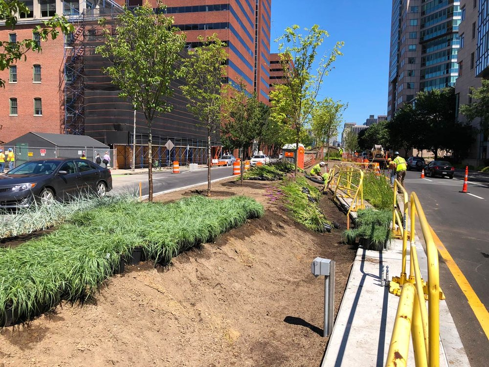 Kendall-Square-Median-Planting-Construction_KMDG_7883.jpg