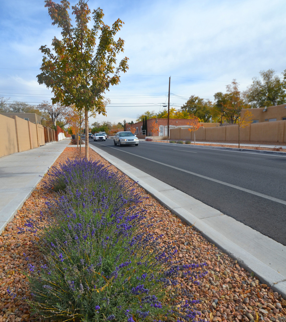 Flowering plants that can withstand the harsh street environment