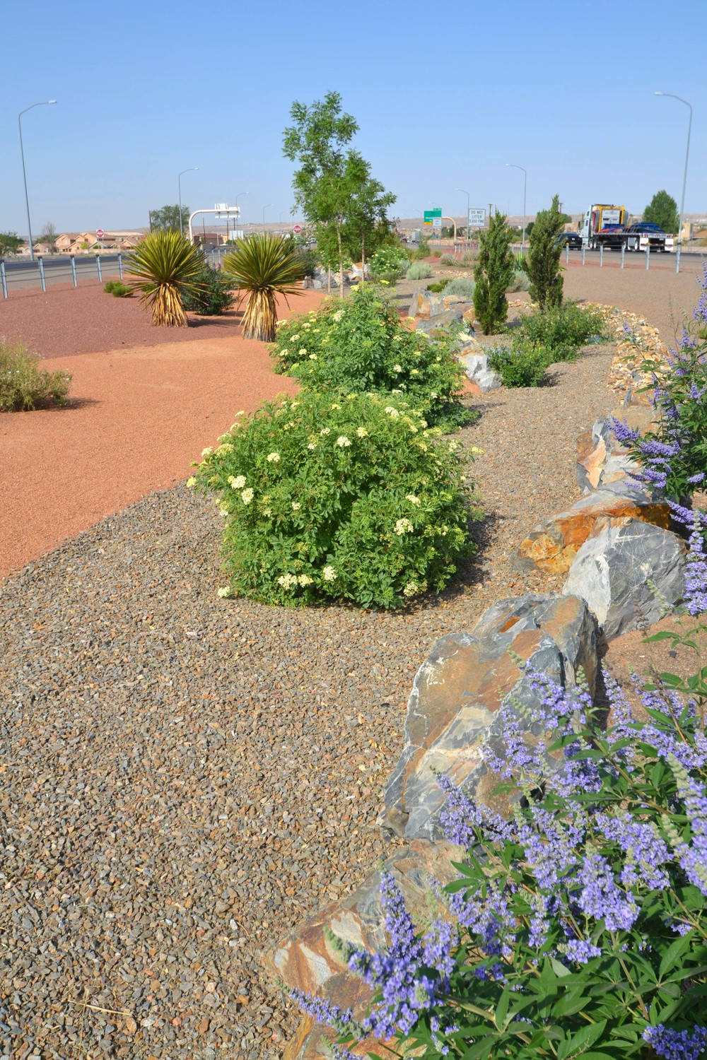 Drought tolerant plantings suitable to Albuquerque's west side