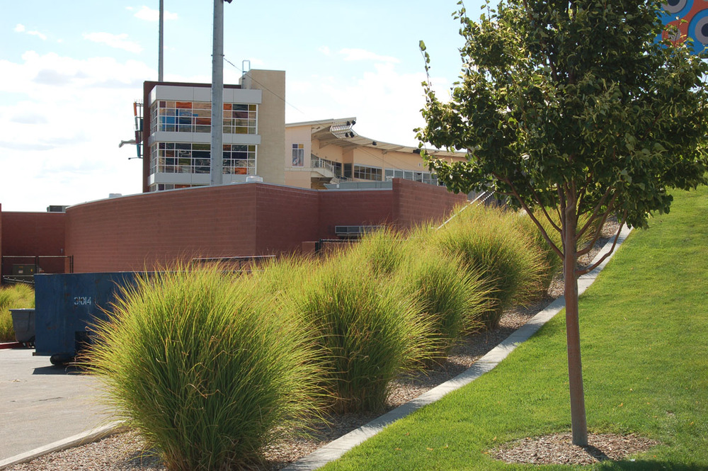 Low maintenance ornamental grasses create texture and movement