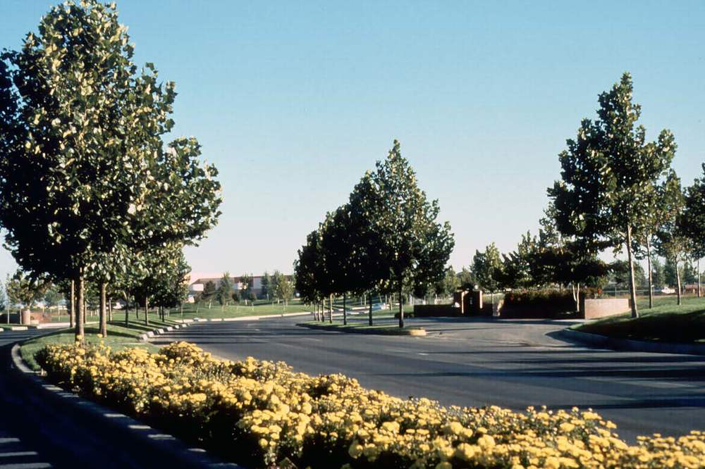 Journal Center median flowers.jpg
