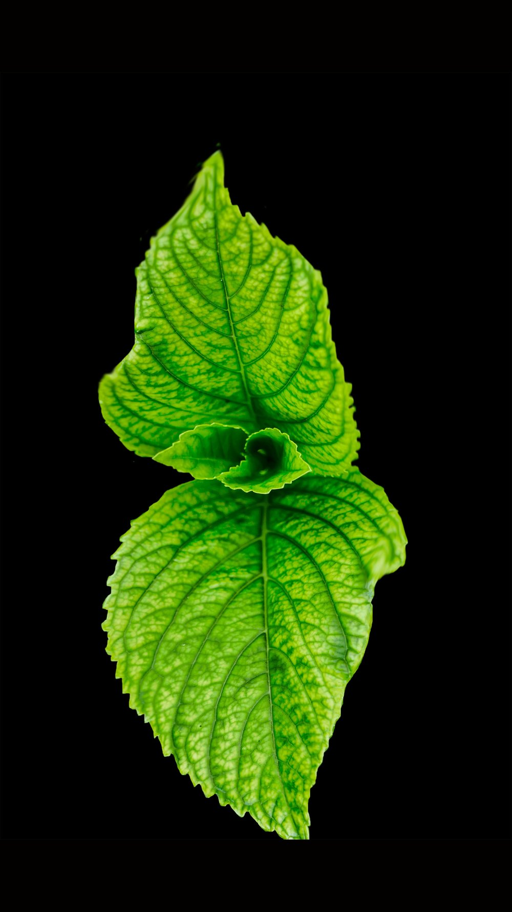 A Mint Leaf - Go Au Naturale and buy some fresh mint.  Looks pretty, tastes great and you can make a mean mojito now summers coming!