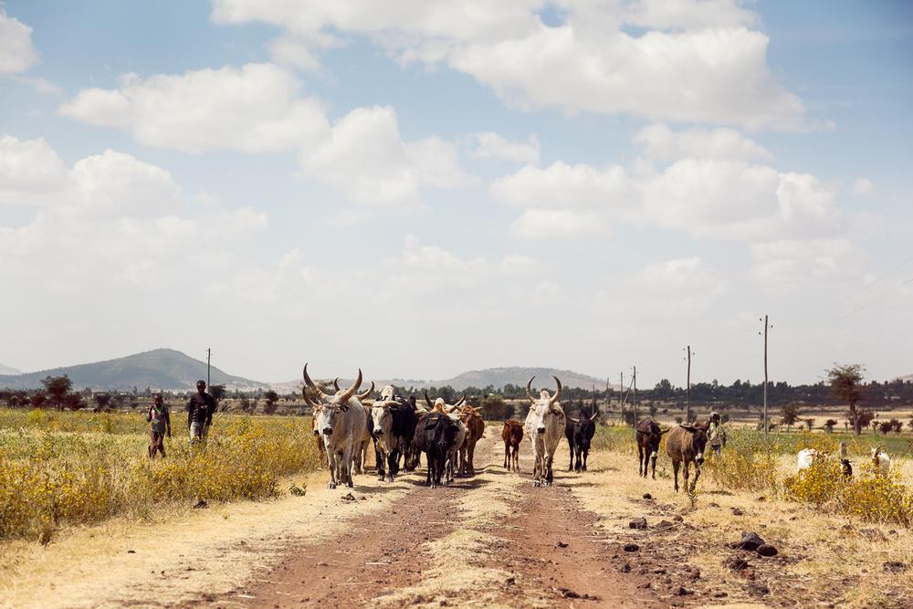 Africa_Day03_0313(finalWEB).jpg