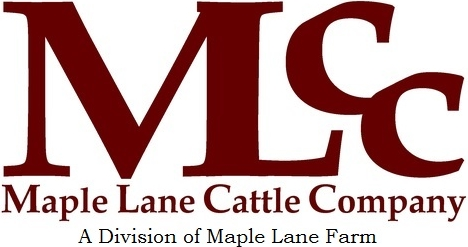Maple Lane Cattle Company