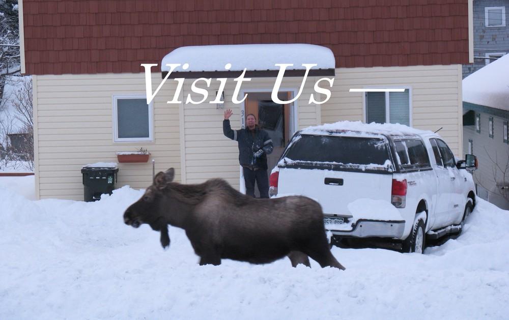 Moose Visit2.jpg