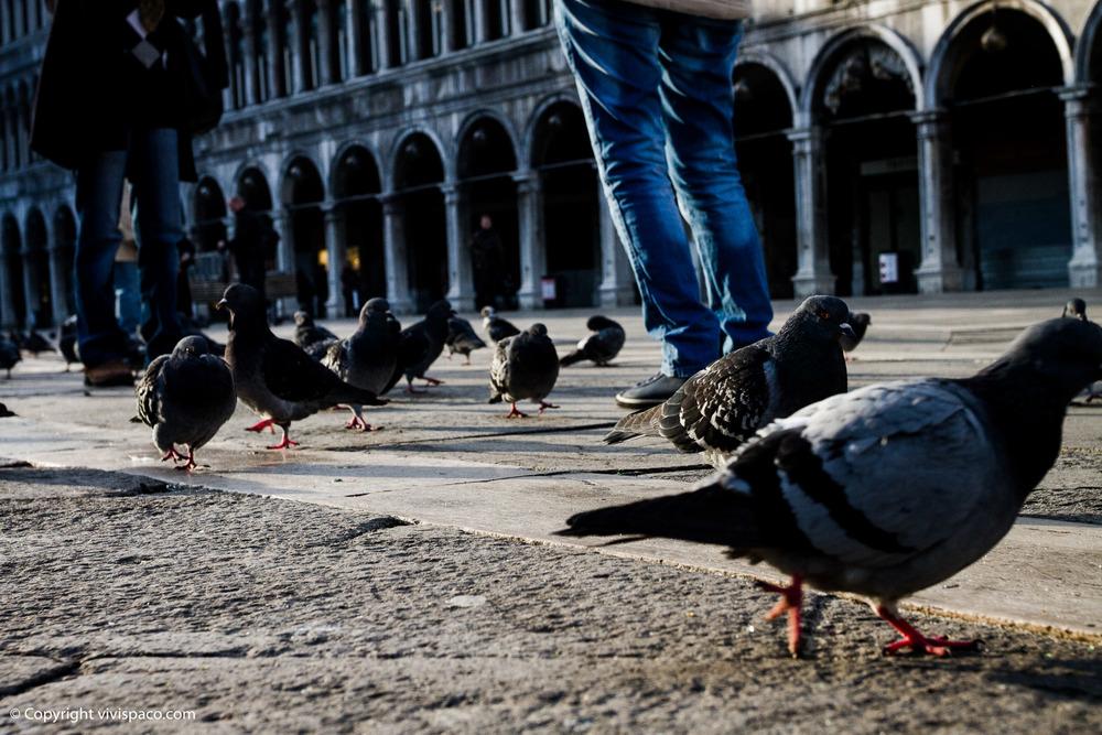 Italia_11.jpg