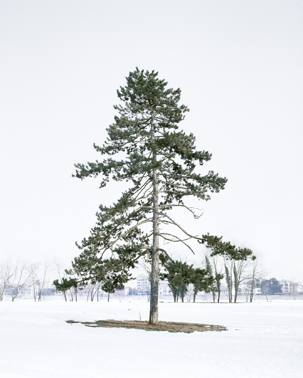 winter mixtape .   …    evergreen via   the photographic dictionary