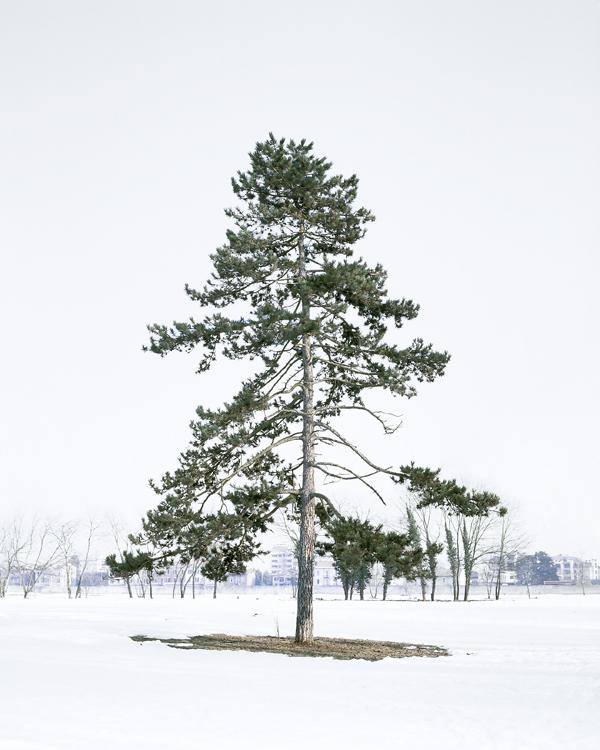 winter mixtape .   …    evergreen via   the photographic dictionary
