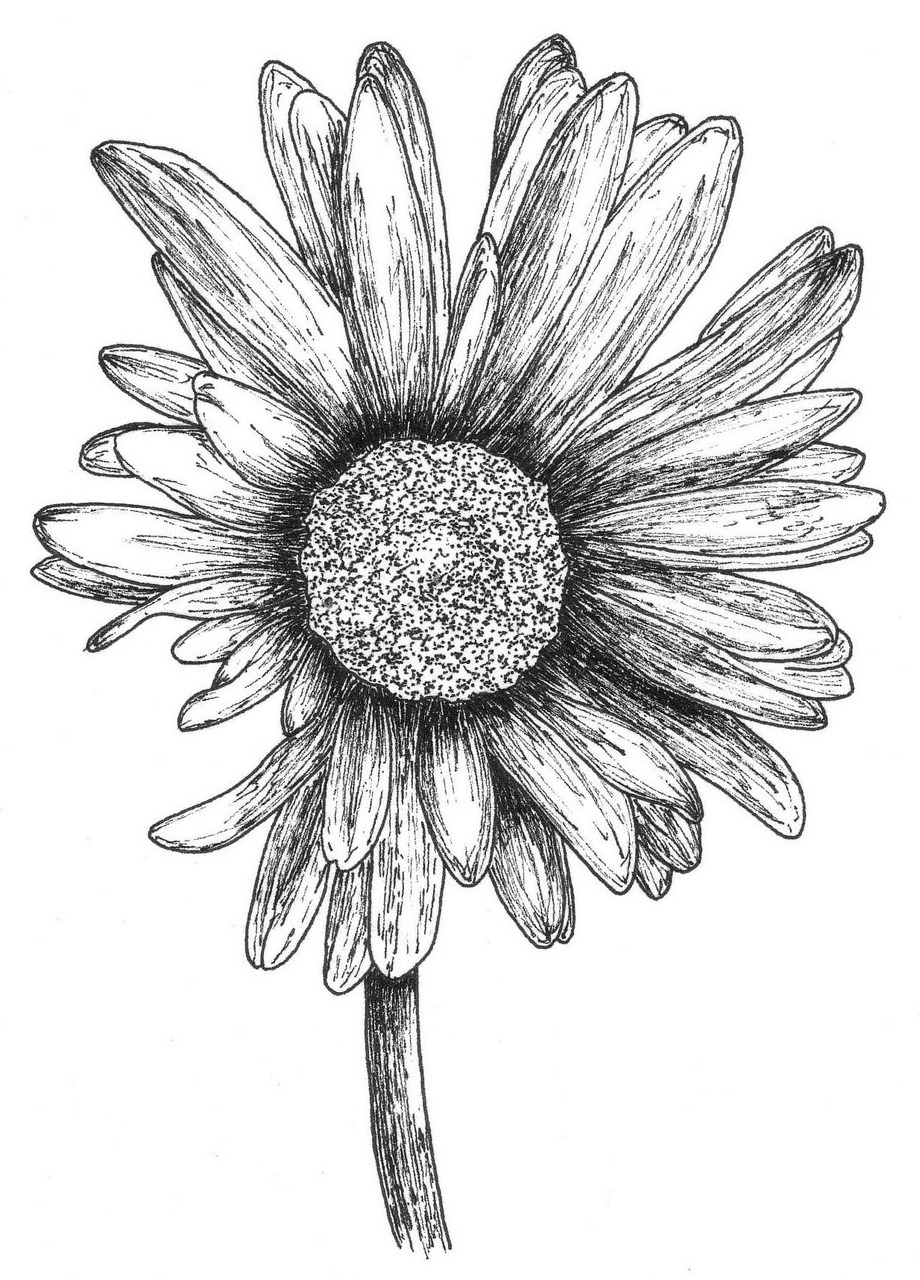 explain this gerbera to your mother. … (right-click///save link as).