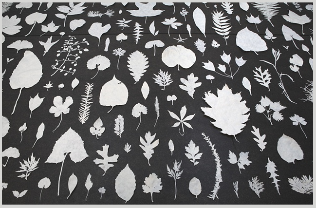 an array of leaves, by nami yamamoto. … it's finally beginning to feel like autumn here.  & i'm sure i will have spoken too soon.