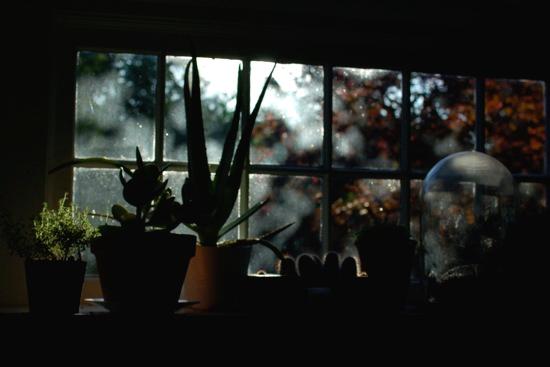 autumn , as captured by  stephanie congdon barnes .