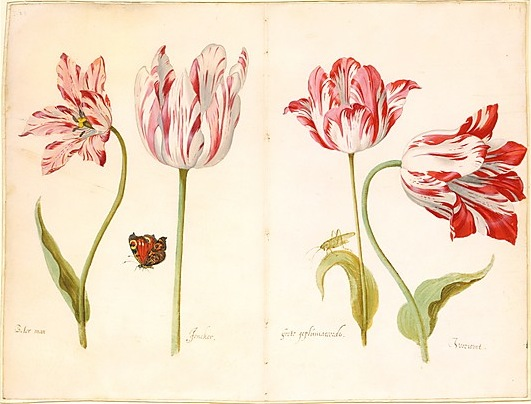i went to the met, & this was the postcard i picked. … four tulips, by jakob marrel