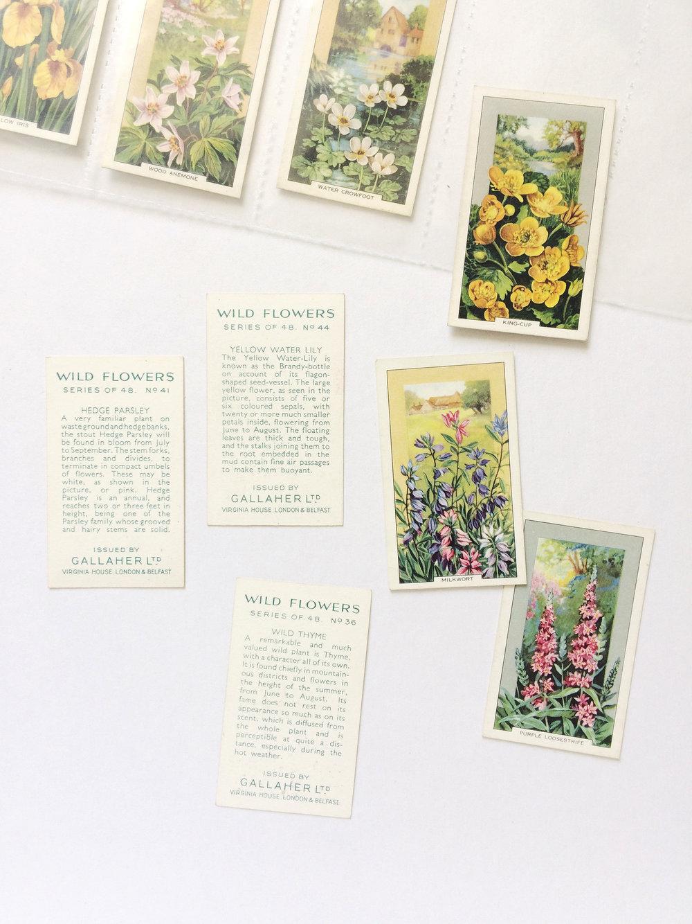 Vintage Cigarette Cards / Paper & Type