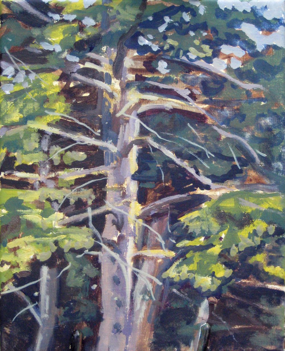 Pine Tree, 8 x 10