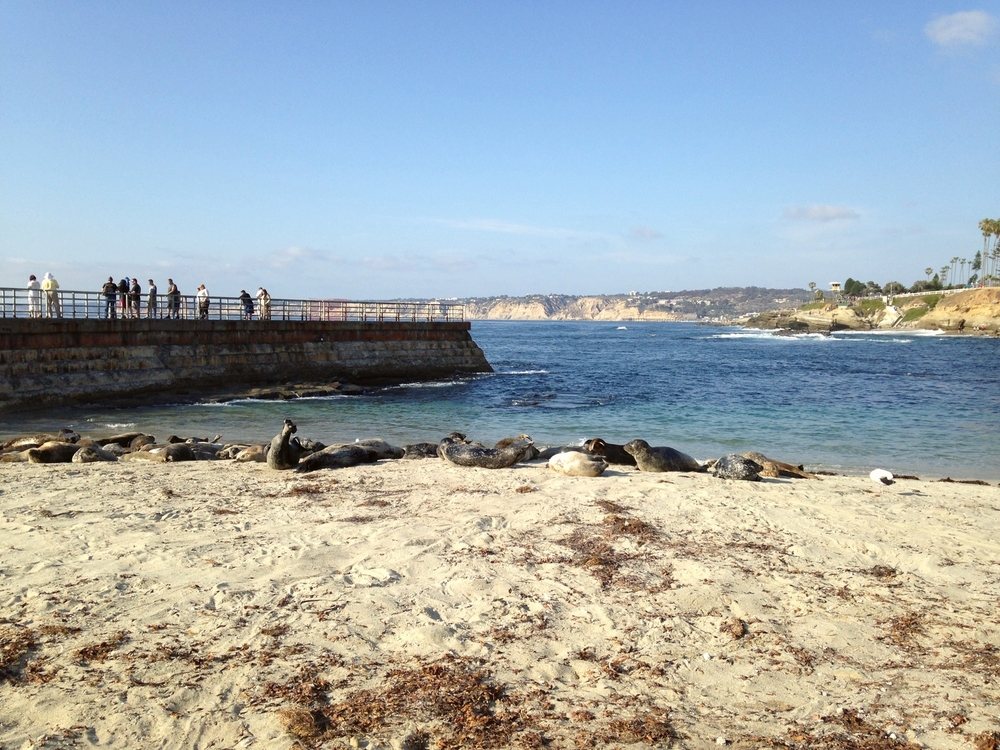 La Jolla Cove / San Diego