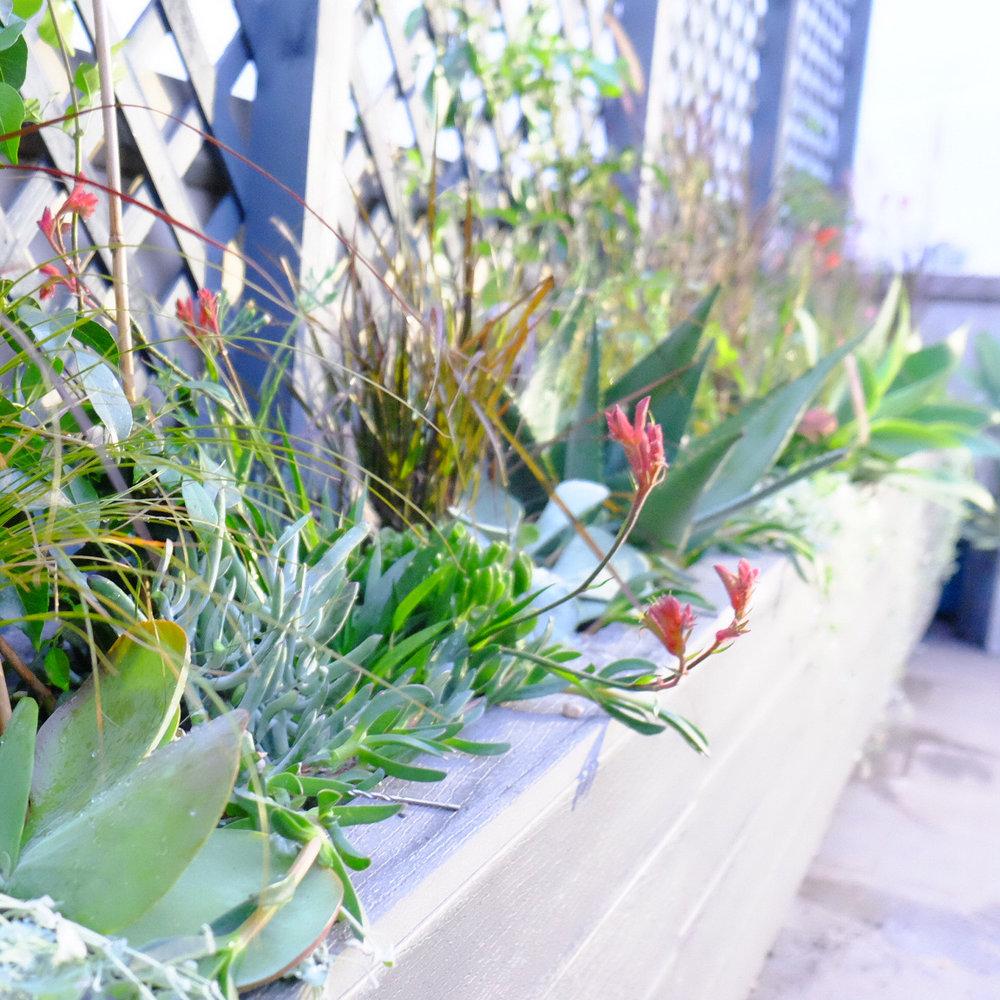 fresh_prince_rooftop3.JPG