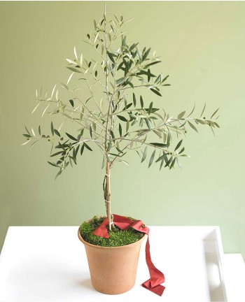 I'd surely kill it (I think our house gets too cold in the winter), but I like the idea of owning a little olive tree.  And I don't think I've actually ever seen an olive growing on a tree…    VivaTerra - VivaTerra - Organic Olive Tree Topiary