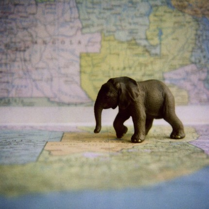 I adore elephants, and maps, and this print of a miniature elephant on a map.  All of these prints in Esoule's etsy shop are fascinating.    Etsy :: esoule :: Elephant on Map, 6x6 print