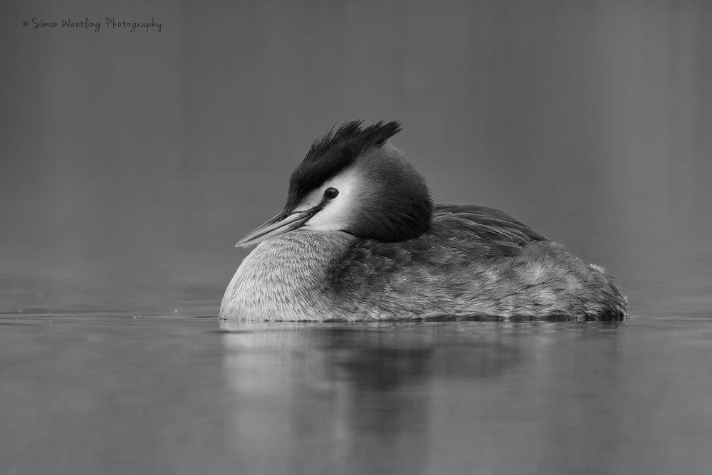 Other bird species -