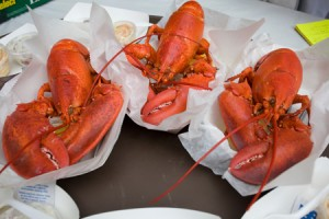 Three cooked Maine lobsters