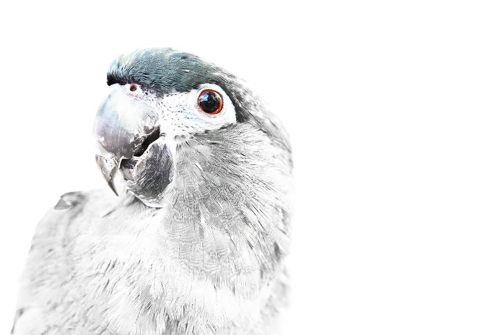 Parrot_1_3.jpg