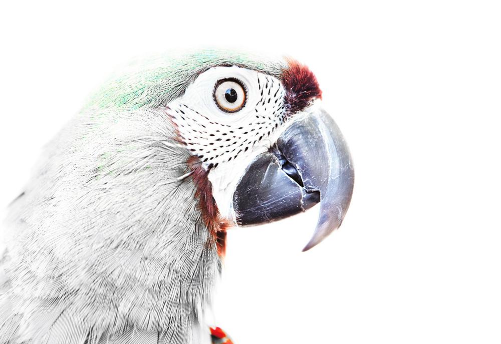 Parrot_5_2.jpg