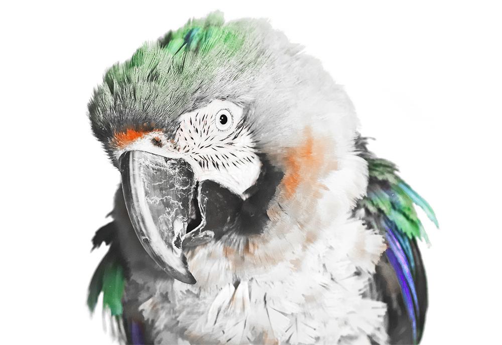 Parrot_27_7.jpg