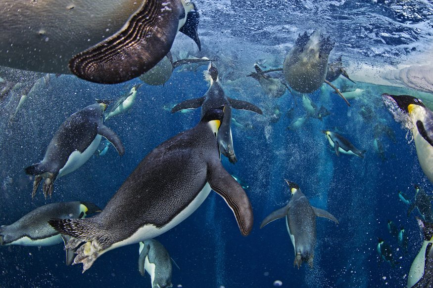 Underwater Worlds Winner: Bubble-jetting emperors -Paul Nicklen (Canada)