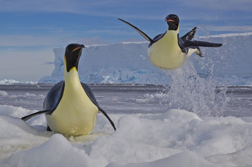 Winner:Frozen moment -Paul Nicklen (Canada)