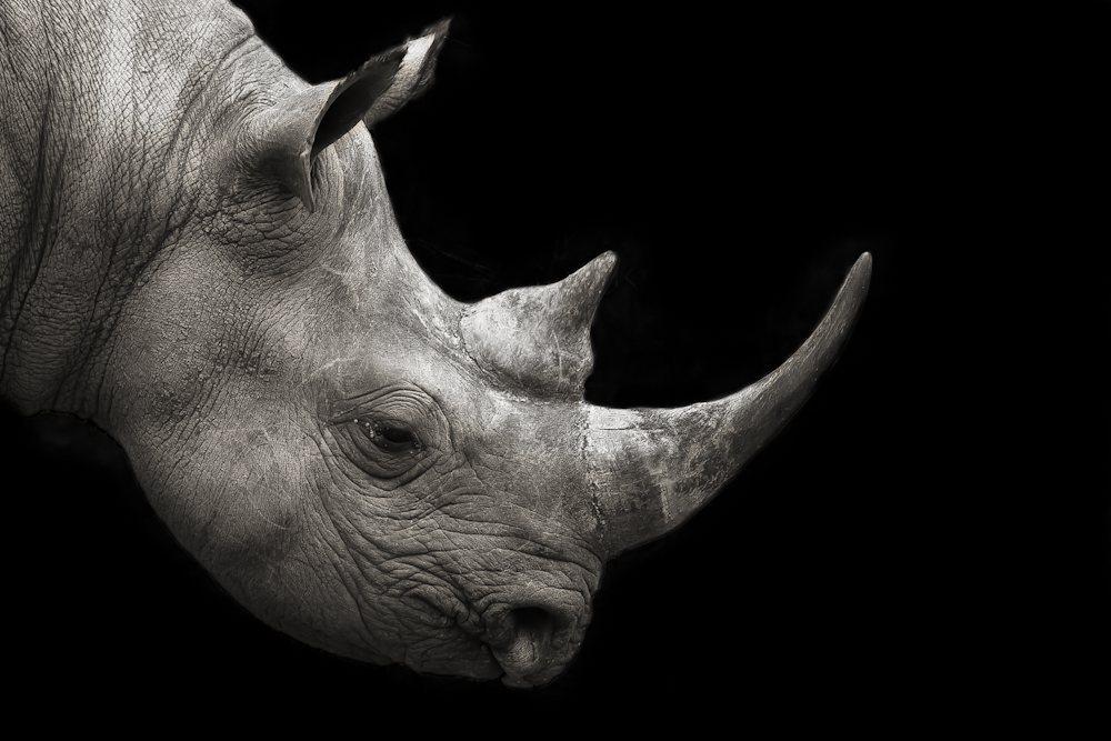 Rhinoceros © Mario Moreno